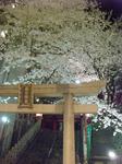 080328_12_kasuga1.jpg